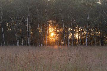 Sonnenlicht zwischen den Bäumen von Tania Perneel