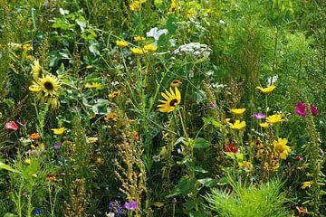wilde bloemenveld van Angelique Rademakers