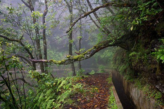 Levada do Furado, Madeira
