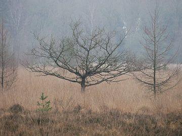 Zwei kleine Bäume im Wald von L Swinkels