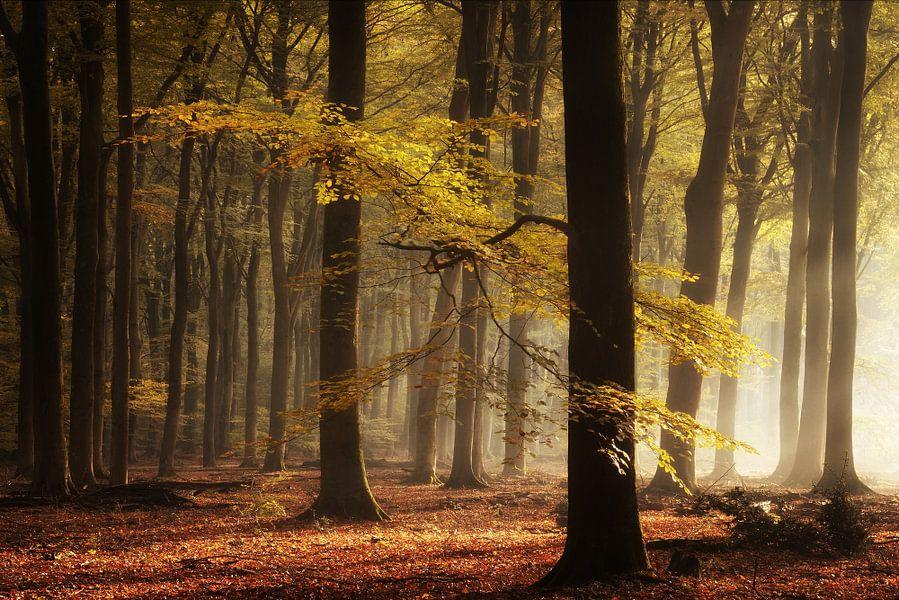 The right light von Martin Podt
