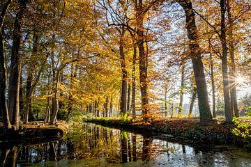 Wald in Herbstfarben von Pierre Verhoeven