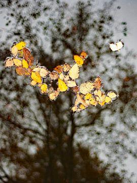 Eendagsboom, herfstbladeren op het water met in de achtergrond een kale boom van Anne Hana