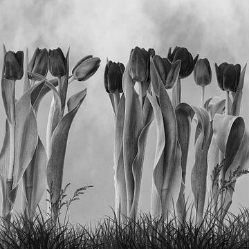 Tulpen im Garten von Klaartje Majoor