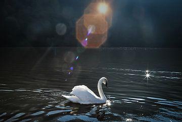 Swan lake sur Dennis Timmer