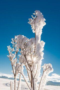 Zon achter ijsbloemen van Denis Feiner