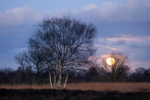 Een volle Maan komt op over het heideveld bij Trimunt in de provincie Groningen