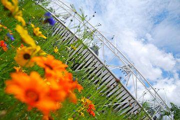 Olympische bloemen von Melanie Verdoorn
