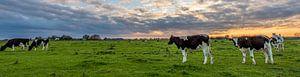 Panorama koe