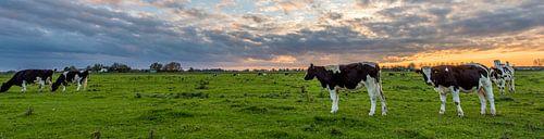 Panorama koe van