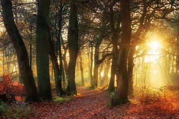 Gouden herfstlicht in het bos van