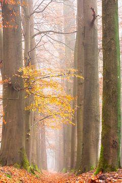 Schauen Sie durch neblige Wälder. von Francis Dost