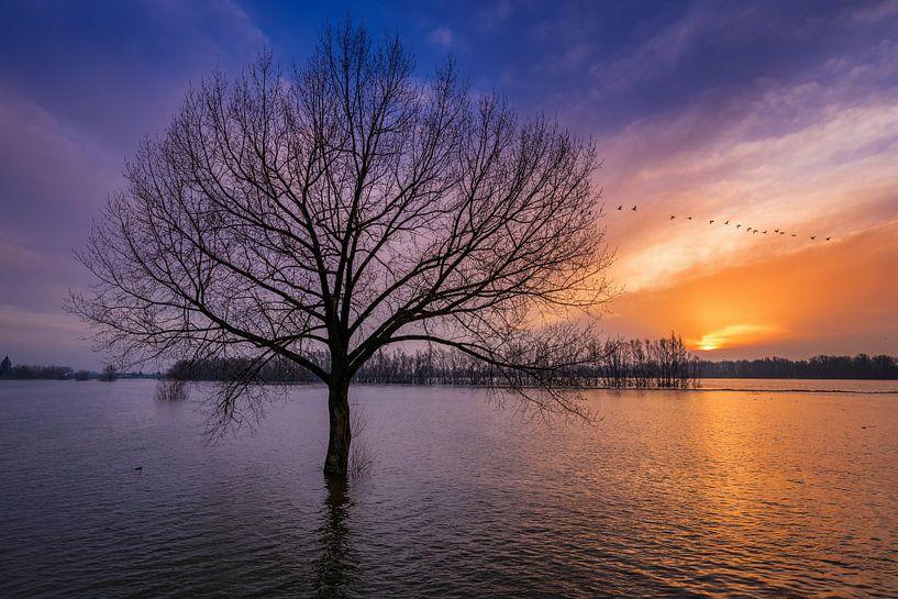 Hoog water in de Waal van Sander Peters Fotografie