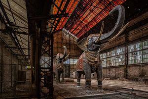 Elefanten in einer verlassenen Fabrik in Frankreich von Beyond Time Photography