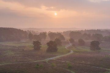 mystieke heide in oranje ochtendlicht van Francois Debets