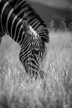Zebra schwarz-weiß von Dave Oudshoorn