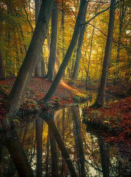 Die Symphonie der Natur von Joris Pannemans - Loris Photography