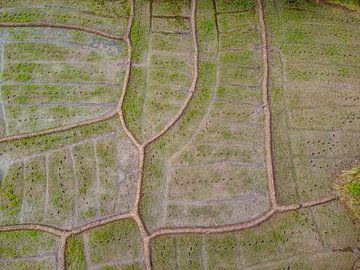 Rijstenvelden van Nicole Nagtegaal