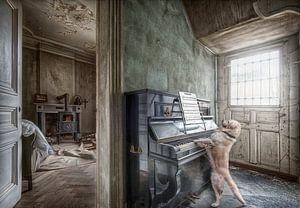 Hond speelt piano
