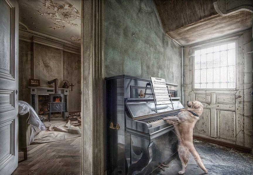 Hond speelt piano van Marcel van Balken