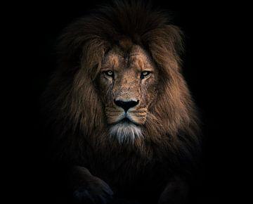 Lion portrait van Jesper Stegers