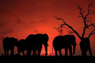 Zonsondergang in Afrika (Elephant sunset) van Ed Peeters