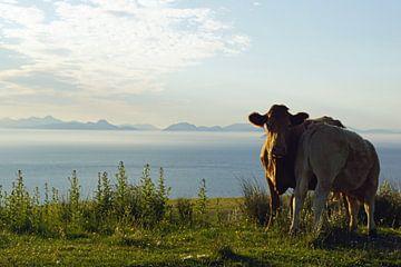 Kühe im Skye Museum of Iceland Life von Babetts Bildergalerie