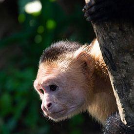 Vilain singe dans l'arbre sur Bianca ter Riet