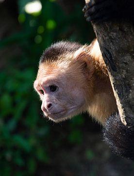 Ondeugende aap in de boom van Bianca ter Riet