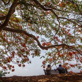 In de schaduw onder een boom van Ron van Ewijk