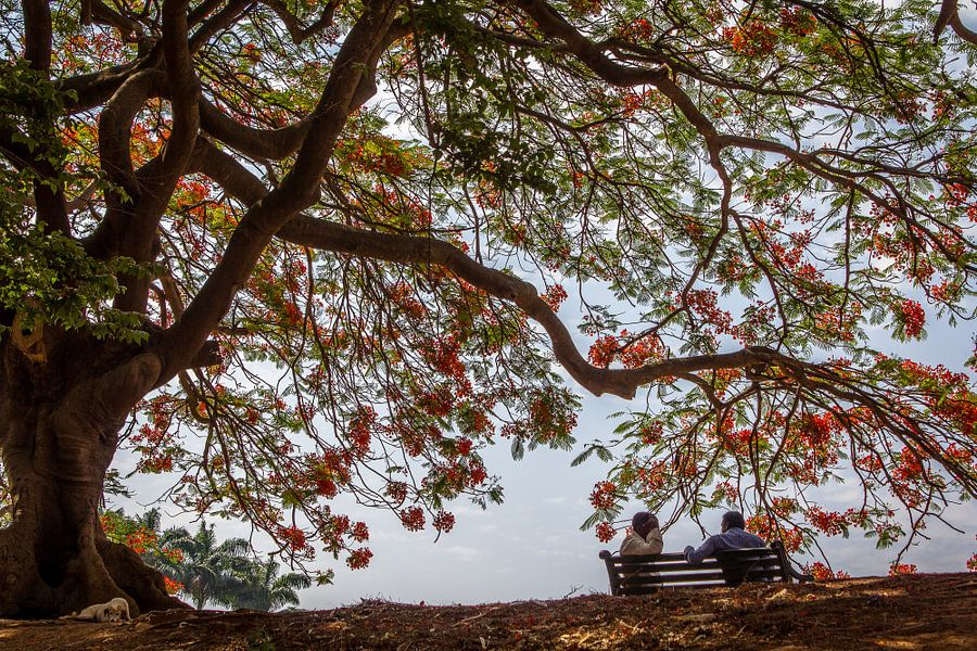 In de schaduw onder een boom