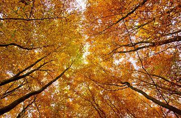 Het oranje bladerdak van Nathan Marcusse