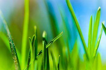 Frisches Grün von pixxelmixx