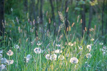 Gras von Kees Korbee