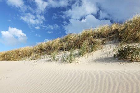 Duinlandschap aan de noordzee op Texel
