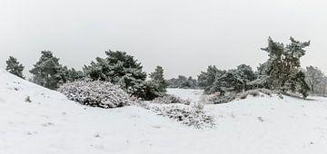 Panorama - Winter Wonderland