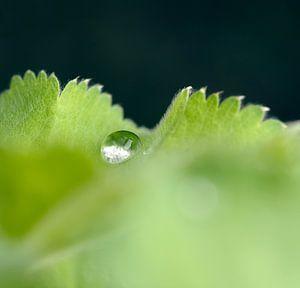 Droplet van
