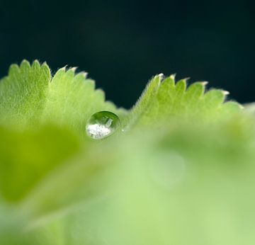 Droplet von Martijn Schornagel
