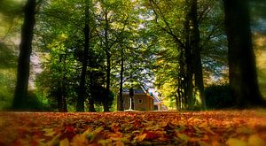 Dromerige herfst