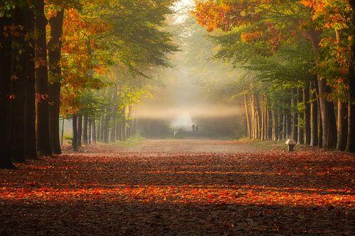 Herfst horizontale stralen van