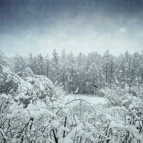 Winter landscape van