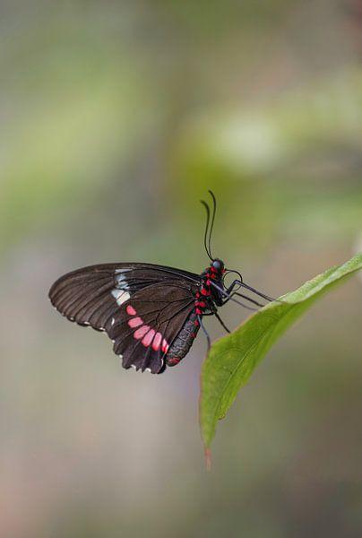 Schmetterling von Esther Bakker-van Aalderen