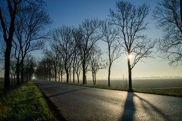 Sonnenschein im Winter von Willian Goedhart