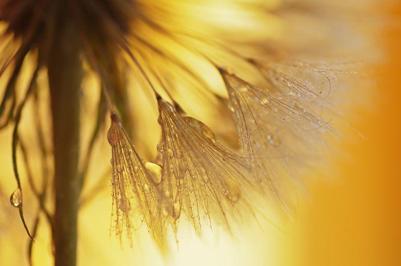 Paardebloemen licht van Tanja Riedel