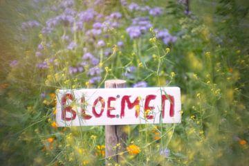 Blumenwiese von What I C