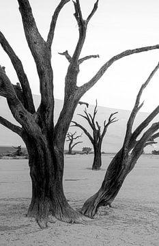 Bewaard door de natuur van Joris Pannemans - Loris Photography