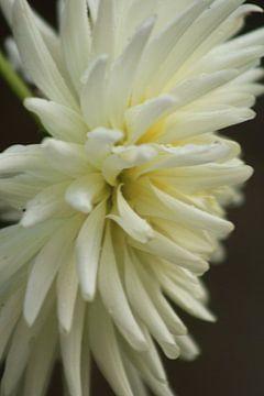 bloem met kleur van milan willems