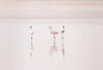 Roze flamingo's in Nederland van Arisca van 't Hof
