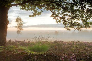Doorkijk Balloërveld met paarse heide en mist van
