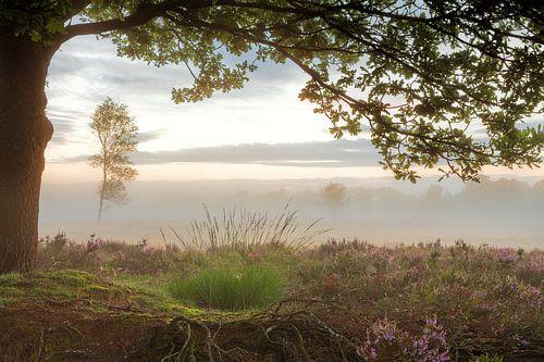 Doorkijk Balloërveld met paarse heide en mist